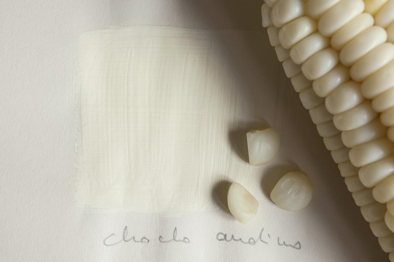 Immagine di mais su tinta bianca